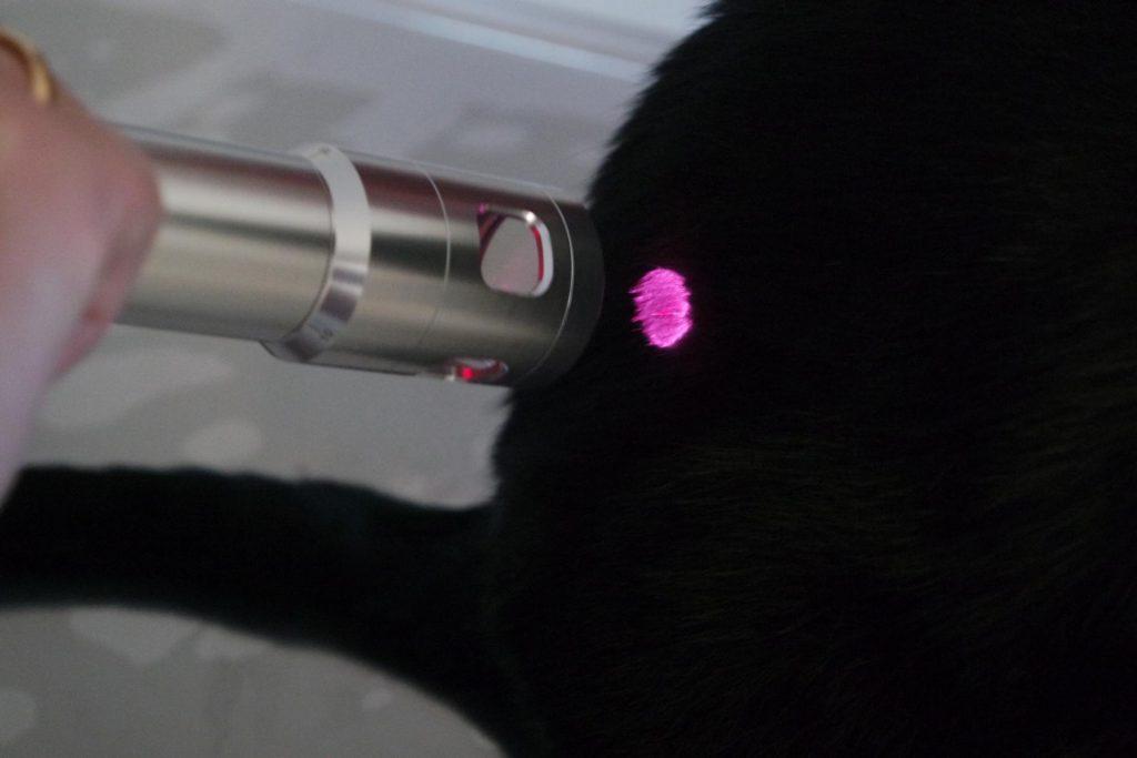 Laserbehandlung Katze